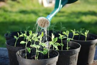 organic-seed.jpg
